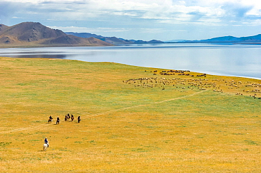 Herders on horseback, and their herd, Lake Khovsgol, Mongolia. August 2005.