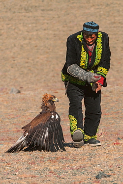 Kazakh Golden Eagle Hunter with his Eagle. Eagle Hunters Festival, Altai Mountains, Bayan-Ulgii, Western Mongolia. Medium repro only