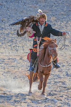 Eagle hunter on horse with female golden eagle (Aquila chrysaetos) at the Eagle Hunters festival, nearing finish line. Near Ulgii Western Mongolia. Medium repro only