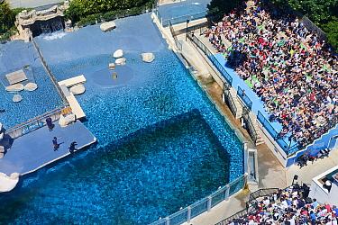 Aerial shot of the pool where the California sea lions (Zalophus californianus) perform their show, ZooParc de Beauval, Saint-Aignan, France.