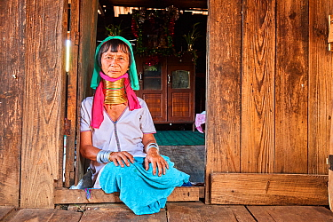 Kayan Lahwi woman with brass neck coils and traditional clothing sitting next to the front door of her home. In the background stands a buddhist altar. The Long Neck Kayan (also called Padaung in Burm...