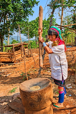 Kayan Lahwi woman with brass neck coils and traditional clothing pounding rice in a wooden mortar. The Long Neck Kayan (also called Padaung in Burmese) are a sub-group of the Karen ethnic people from...
