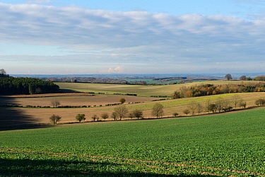 Downland field of young oilseed rape crop on a bright winter day with long views of Berkshire and Wiltshire scenery, England, UK. November.