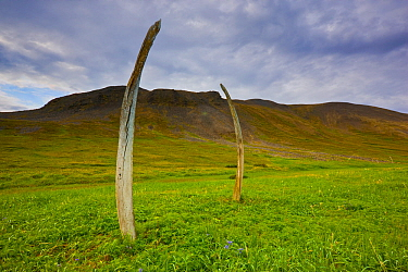 Whale bones arranged by indigenous people at the ancient Chukchi site currently known as 'Whalebone Alley' on Yttygran Island in the Bering Sea, Chukotka, Russia.