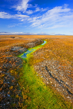 Arctic tundra with frost-wedging features caused by repeated freeze-thaw processes in rocky soil, and surface water accumulation from melting permafrost. Wrangel Island, Siberian Arctic, Chukchi Sea,...