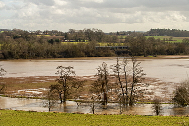 River Lugg and flood damaged winter wheat or barley crop, Herefordshre, England, March 2020.