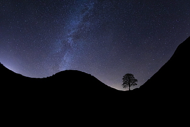 Sycamore Gap silhouetted at night, Milky Way above. Hadrian's Wall, Northumberland National Park, Northumberland, England, UK. December 2018.