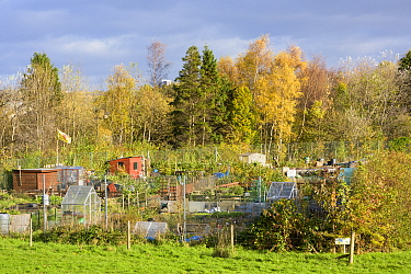 Allotments, Tollcross, Glasgow, Scotland, UK. November.