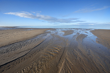 Channels on beach at low tide. Brouwersdam, Zeeland, The Netherlands. November 2019.
