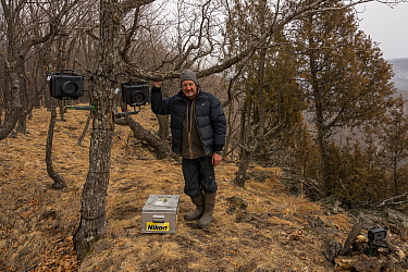 Photographer Sergey Gorshkov setting up remote camera traps to photograph Siberian tiger in Land of the Leopard National Park, Far East Russia. 2019