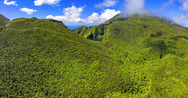 Boeri Lake in mountains surrounded by cloud forest, highest lake on island at 2800 feet. Morne Trois Pitons National Park, Dominica, Lesser Antilles. 2020.