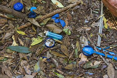Blue plastic items including spoon, bottle tops and cigarette lighter gathered by male Satin bowerbird (Ptilonorhynchus violaceus) at bower. Lamington National Park, Queensland, Australia. 2015.