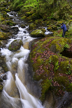 Photographer Staffan Widstrand taking photos of small waterfalls, Tangjiahe Nature Reserve, Sichuan, China. April 2015.