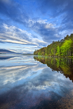 Forest and clouds reflected in Loch Garten. Strathspey, Cairngorms National Park, Scotland, UK. May 2009.