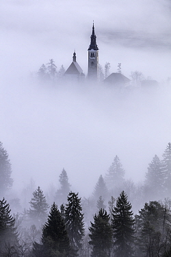 Church of the Assumption of St. Mary in mist, viewed through conifers on shore of Lake Bled, Slovenia. February 2017.