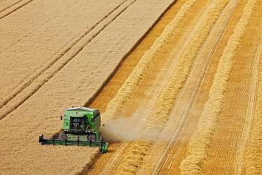 Combine harvester harvesting cereal crop. Maiden Castle, Dorset, England. August 2010.