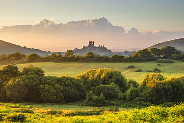 Corfe Castle from Corfe Common, Isle of Purbeck, Dorset, England, UK