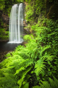 Henrhyd Falls and ferns, Brecon Beacons National Park, Powys, Wales, UK, June.