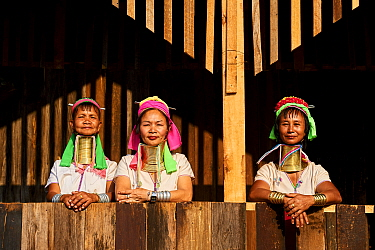 Kayan Lahwi women wearing brass neck coils and traditional clothing, stand on house deck . The Long Neck Kayan (also called Padaung in Burmese) are a sub-group of the Karen ethnic people from Burma. T...