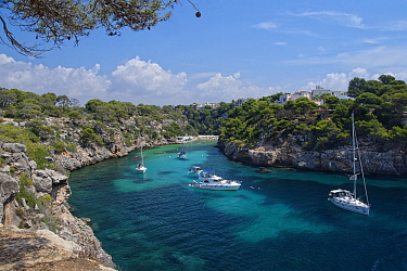 Yachts moored in the cove at Cala Pi, viewed from clifftops, Mallorca south coast, August 2018.