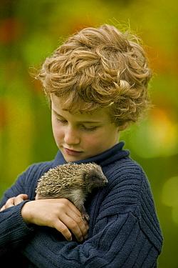 Boy (6-years) holding orphaned hedgehog {Erinaceus europaeus} UK.