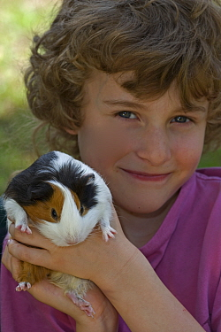 Boy holding pet Guinea Pig {Cavia porcellus} USA