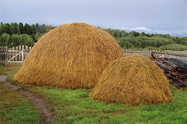 Traditional haystack, Siberia, Russia