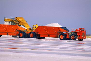 Vehicles collecting salt for export, Baja California, Mexico