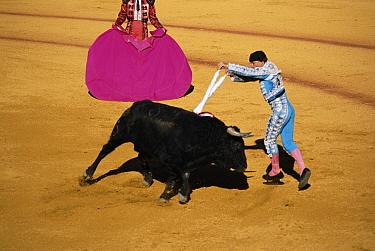 Bull fight, Spain