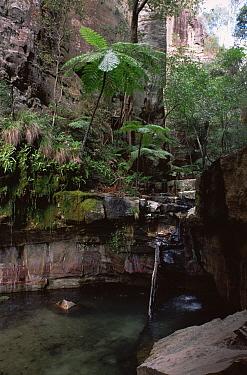 Waterfall within Carnarvon Gorge NP, Queensland, Australia, 1991
