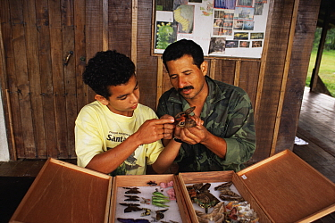 National Park employee Paratoxonomists showing insect to trainee, tropical rainforest, Costa Rica