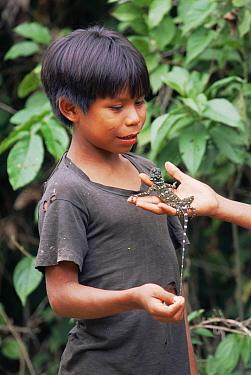 Mayoruna Indian child holding a gecko, Amazon Basin, Peru, South America