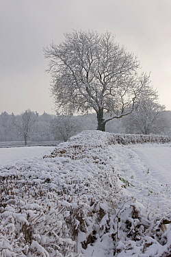 Winter hedgerow covered in hoar frost, Herefordshire, England, UK, December 2010