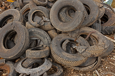 Pile of used tyres, Recycling Center, Ithaca, New York, USA, property released.