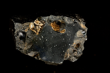 Obsidian (a volcanic glass) with Cristobalite (SiO2) minerals Sphenoids, Malheur County, Oregon