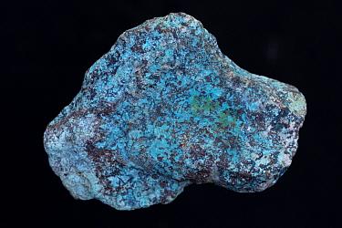 Shattuckite, a copper bearing mineral, Tantara mine, Katanga province, Democratice Republic of Congo, Africa.