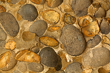 Hertfordshire puddingstone, sedimentary conglomerate rock, from Hertfordshire, England.
