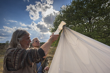 Biologists from Radboud University and Entomological Society Krefeld collecting specimens from malaise trap. Long-term monitoring has revealed a 75% decline in insect biomass over 27 years. Germany, M...
