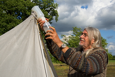 Biologist from Entomological Society Krefeld collecting trapped insects from malaise trap. Long-term monitoring has revealed a 75% decline in insect biomass over 27 years. Germany, April 2019.