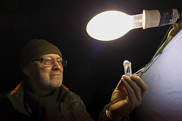 Researcher examining moth attracted to light during insect trapping and identification session. Long-term monitoring has revealed a 50% decrease in moth numbers in 25 years. De Kaaistoep Nature Reserv...