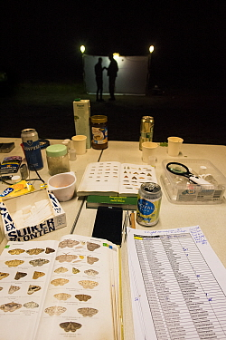 Identification guides and equipment laid out during insect trapping and identification session at night, researchers silhouetted at trap in background. Long-term monitoring has revealed a 50% decline...