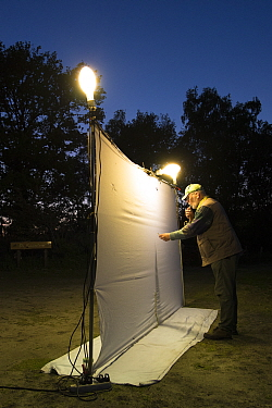 Researcher using pooter to collect insects during trapping session, insects attracted by light to white sheet. Long-term monitoring has revealed a 50% decrease in moth numbers in 25 years. De Kaaistoe...