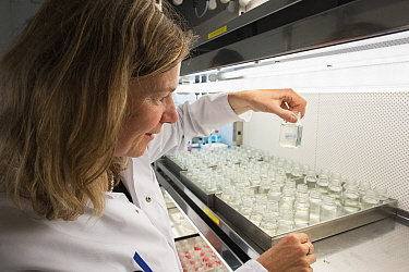Ecotoxicologist conducting research in laboratory into impact of thiacloprid, a neonicotinoid, on aquatic organisms. Organisms found to be 2500 times more sensitive to the insecticide in the natural e...