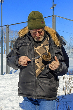 Man with pet Barguzinsky sable (Martes zibellina) Baikal Biosphere Reserve, Siberia, Russia. April 2017.