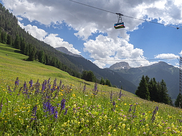 Cable car over species rich alpine meadow with Meadow clary (Salvia pratensis) and Yellow rattle (Rhinanthus sp), coniferous forest on mountains in background. Fassa Valley, Dolomites, Trentino, Italy...