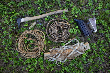 Tools used for traditional tree beekeeping. Tree hive beekeeping is a traditional practice that goes back 1000 years, Poland.