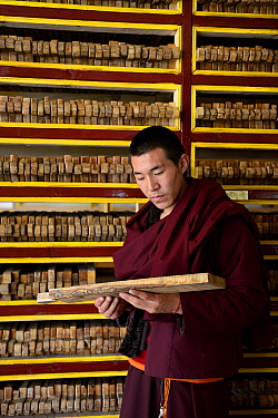 Monk holding wooden plate for printing Buddhist texts, plates stacked in shelves behind. In library, Palpung Monastery, Kham, Dege County, Garze Tibetan Autonomous Prefecture, Sichuan, China. 2016.