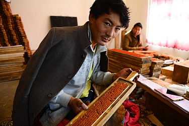 Craftsman in workshop with wooden plate for printing Buddhist prayers. Palpung Monastery, Kham, Dege County, Garze Tibetan Autonomous Prefecture, Sichuan, China. 2016.