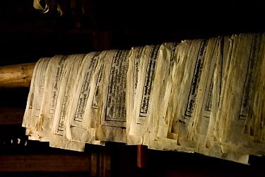Freshly printed Buddhist texts drying. Palpung Monastery, Kham, Dege County, Garze Tibetan Autonomous Prefecture, Sichuan, China. 2016.
