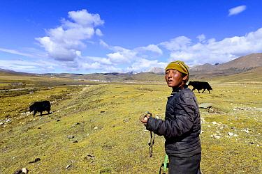 Shepherdess holding sling used to control Yak (Bos grunniens). Litang, Kham, Garze Tibetan Autonomous Prefecture, Sichuan, China. October 2016.